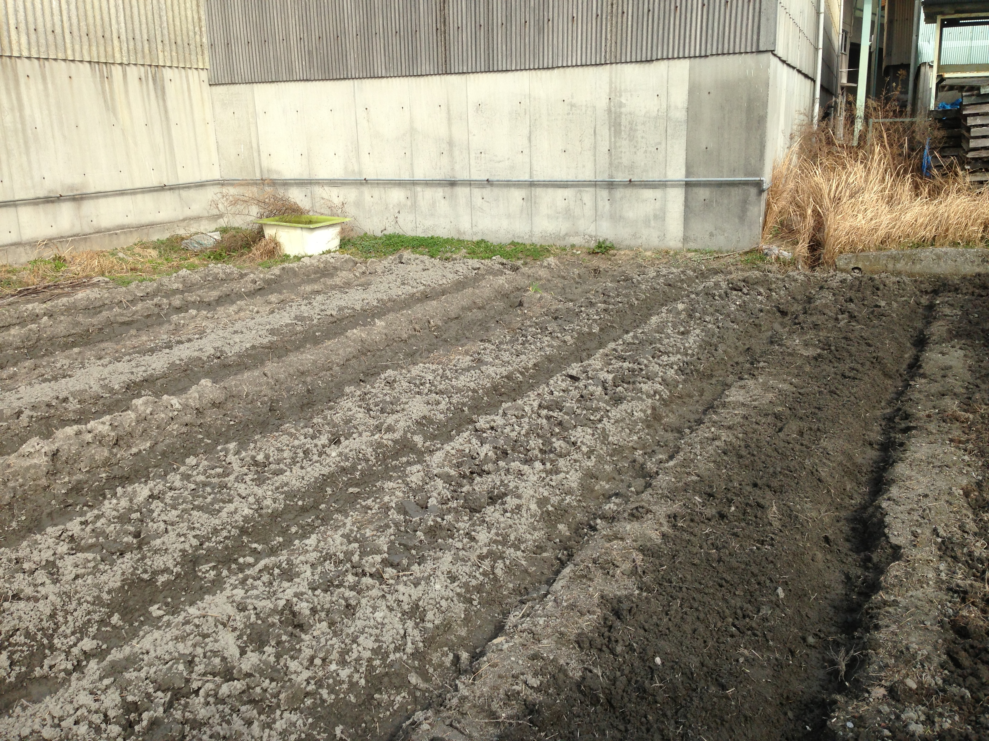ジャガイモ 植え付け 秋 時期 の